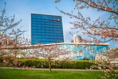 Swedbank and sakura park Royalty Free Stock Image
