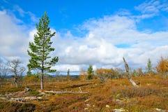 Sweden foto de stock