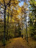 Sweden autumn fall leaves colors Royalty Free Stock Photography