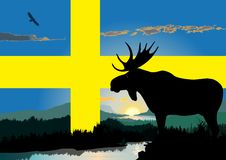 Sweden wildlife. Wildlife and midnight sun in Sweden swedish flag in background Stock Photography