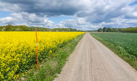 Swedish agricultural road with rape plants Stock Photos
