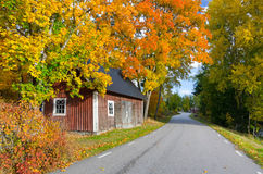 Swedish autumn contrasts Royalty Free Stock Image