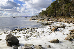 Swedish coast in March stock photography