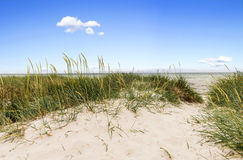 Swedish coast in summertime Royalty Free Stock Images