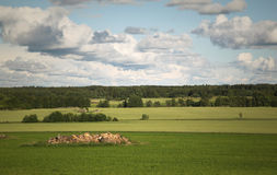 Swedish country side. A typical summer view along the country side of Sweden, with green fields and forests Royalty Free Stock Image