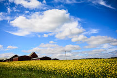 Swedish Countryside Stock Image
