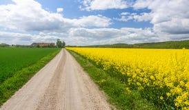Swedish farm road through blooming rape field Royalty Free Stock Images