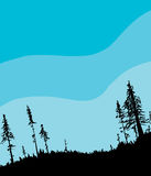 Swedish Forest Background with Blue Sky Stock Photography