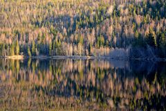 Swedish forest and its reflection along the river Stock Photos