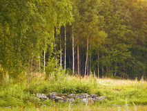 Swedish forest Royalty Free Stock Photos