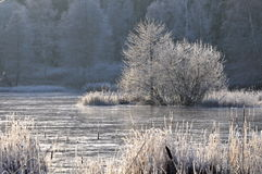 Swedish frosty landscape Stock Photos