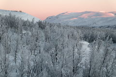 Swedish Frozen Hills. Taken in  Lapland, Northern Sweden, near Bjorkliden. Taken In February when the frost is on the trees and the lake frozen. The light Stock Image