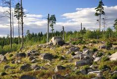 Swedish group of deers Stock Photo