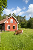 Swedish Idyll Royalty Free Stock Image