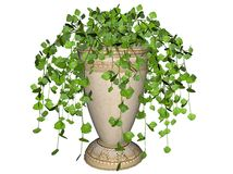 Swedish ivy plant in pot. Three dimensional illustration of leafy green Swedish ivy plant in pot, isolated on white background Stock Photography