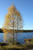 Swedish Lake Stock Photography