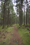 Swedish Magical Forests. Swedens magical forest is like being in a fairy tale story Stock Images