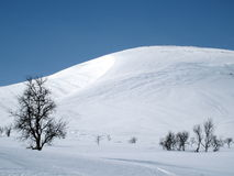 Swedish mountain. With snow a sunny winter-day Royalty Free Stock Photography