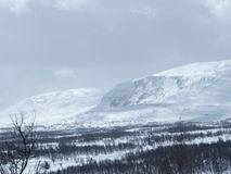 Swedish mountain. With snow a winter-day Royalty Free Stock Photos