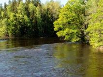 Swedish salmon area Royalty Free Stock Image