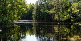 Swedish salmon area Stock Images