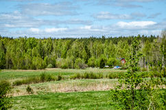 Swedish nature. A hidden country house in the Swedish forestial nature stock image