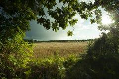 Swedish nature and landscape Stock Photography