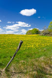 Swedish pasture field in May month Stock Photo