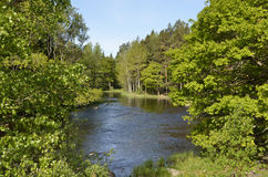 Swedish river Royalty Free Stock Photography