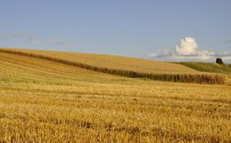 Swedish rural farmland royalty free stock photos