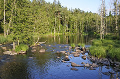 Swedish salmon area. Swedish natural salmon river in summer time Royalty Free Stock Images