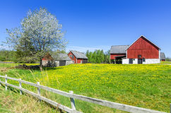 Swedish spring farm with traditional fence Royalty Free Stock Images