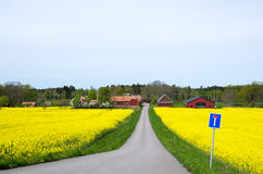 Swedish spring landscape Royalty Free Stock Photos