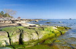 Swedish spring sea coast in green colors Stock Photos