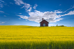 Swedish summer-house. Traditional red, swedish summer-house set in a yellow oat field against a blue sky, the island of Frösön, Östersund, Sweden stock photos