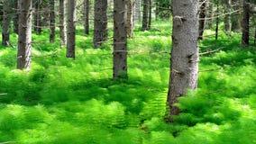 Swedish undergrowth Stock Photography