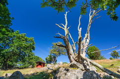 Swedish wilderness in summer season Royalty Free Stock Image