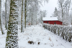 Swedish winter colors Stock Image
