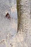 Swedish winter contrasts Stock Photography
