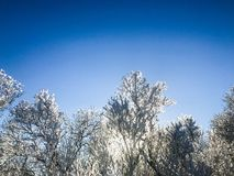 Swedish winterday. 2018 - snow and ice in the forest Stock Photos
