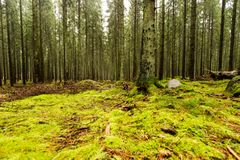 Swedish woods with Green Moss. Dark Forest with Moss royalty free stock images