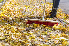 Sweeping foliage on a pavement Stock Image