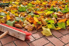 Sweeping Leaves Stock Image