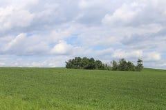 Sweeping Vistas in summer. Sweeping Vistas. Taken in Alberta, Canada Stock Photo