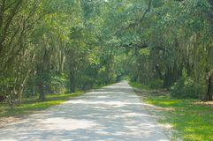Sweeping Willows On a Long Drive Way. A sweeping willow lined drive-way in near Savannah, Georgia royalty free stock image