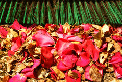 Sweepings Outdoor Petals Leaves Raking Up Royalty Free Stock Photography