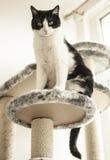 Sweepy -猫 免版税图库摄影