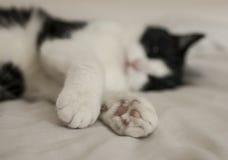 Sweepy猫 免版税库存图片
