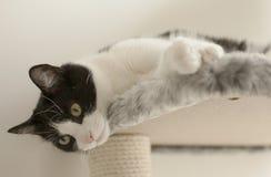 Sweepy - die Katze/Lügen Stockbild