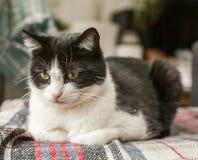 Sweepy svartvit katt - en bekymrad blick fotografering för bildbyråer